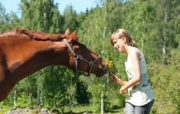 Bruin paard met glimlachend meisje stock afbeelding