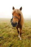 Bruin paard in mist stock foto's