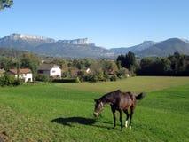Bruin paard op gebied in Savooiekool, Frankrijk Stock Afbeelding