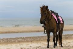 Bruin paard op het strand Royalty-vrije Stock Afbeeldingen