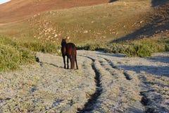 Bruin paard in platteland Royalty-vrije Stock Fotografie