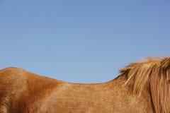 Bruin Paard tegen Blauwe Hemel Stock Afbeeldingen