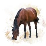 bruin paardportret royalty-vrije illustratie