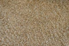 Bruin tapijt met lange stapel Royalty-vrije Stock Fotografie