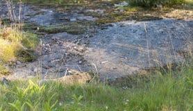 Bruin wild konijn die op de grond liggen Royalty-vrije Stock Afbeelding