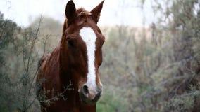 Bruin wild paard