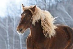 Bruin zwaar paardportret in motie stock afbeelding