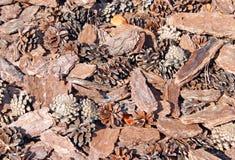 Bruine achtergrond die van sparappel en schors wordt gemaakt Stock Afbeeldingen