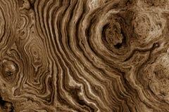 Bruine achtergrond met het patroon van de boomwortel Stock Afbeeldingen
