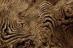 Bruine achtergrond met het patroon van de boomwortel Stock Foto