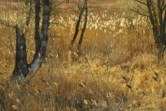 Bruine bies en de boomboegen met polypore bij de zonsondergang Royalty-vrije Stock Afbeeldingen