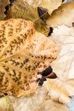 Bruine bladeren Stock Foto