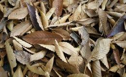 Bruine bladeren Royalty-vrije Stock Foto's