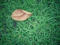 Bruine bladeren een aantal gloeidraden op groen gras Royalty-vrije Stock Fotografie