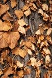 Bruine bladeren op een boomstam royalty-vrije stock foto