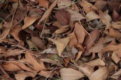 Bruine bladeren ter plaatse Stock Foto