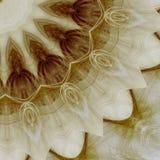 Bruine bloem Royalty-vrije Stock Fotografie