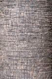 Bruine boomstam als achtergrond van een palmclose-up. royalty-vrije stock afbeeldingen