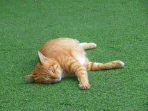 Bruine Cat Taking een Dutje op het Groene Gras Royalty-vrije Stock Foto's