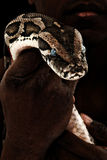 Bruine Constrictor van de Boa in Man Hand stock fotografie