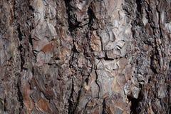 Bruine cork Stock Fotografie