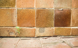 Bruine de achtergrond van de tegelmuur Stock Foto
