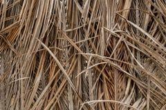 Bruine de achtergrond van kokosnotenbladeren stock fotografie