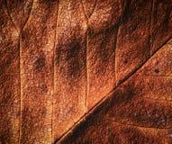 Bruine de herfstbladeren Royalty-vrije Stock Afbeeldingen