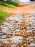 Bruine de herfstbladeren op grond Royalty-vrije Stock Afbeeldingen
