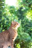 Bruine de kattenzitting en kijkend groen en boogie achtergrond van portretbeautifulâ royalty-vrije stock fotografie