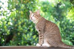 Bruine de kattenzitting en kijkend groen en boogie achtergrond van portretbeautifulâ royalty-vrije stock foto's