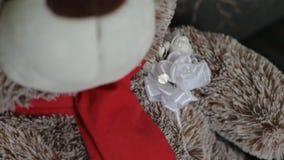 Bruine de pluche draagt welpzitting op de laag, close-up stock video