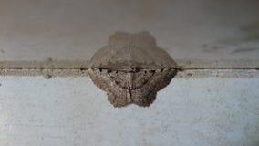 Bruine de vlinderspiegel van Nice in steen Royalty-vrije Stock Afbeeldingen