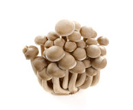 Bruine die beukpaddestoel op wit wordt geïsoleerd Stock Foto