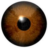 Bruine die oogillustratie op wit wordt geïsoleerd stock foto