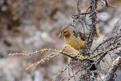 Bruine die vogel op een boomtak wordt neergestreken Royalty-vrije Stock Foto's
