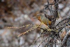 Bruine die vogel op een takje wordt neergestreken Royalty-vrije Stock Foto's