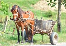 Bruine door paarden getrokken kar. Royalty-vrije Stock Afbeelding