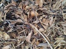 Bruine Droge blad en Takjes op de grondachtergrond Stock Fotografie
