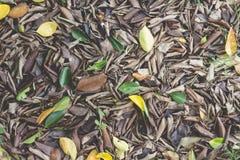 Bruine Droge bladerendaling ter plaatse van tuin Stock Afbeeldingen