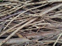 Bruine droge Takjes op de grondachtergrond Stock Afbeeldingen