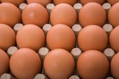 Bruine eieren Royalty-vrije Stock Foto's