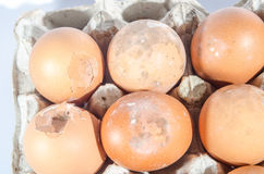 Bruine eieren Stock Foto's