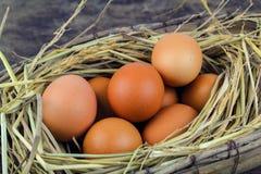 Bruine eieren in de eieren van de nestkip Stock Afbeelding