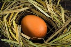 Bruine eieren in de eieren van de nestkip Stock Afbeeldingen