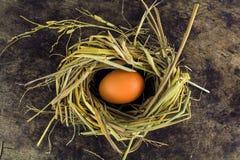 Bruine eieren in de eieren van de nestkip Stock Foto