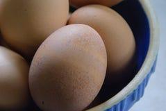 Bruine Eieren in een Blauwe Kom Stock Fotografie