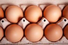 Bruine eieren in een dienblad Stock Foto's