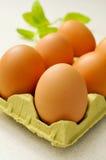 Bruine eieren in een eikarton Stock Foto's