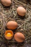 Bruine Eieren in een Nest stock afbeeldingen